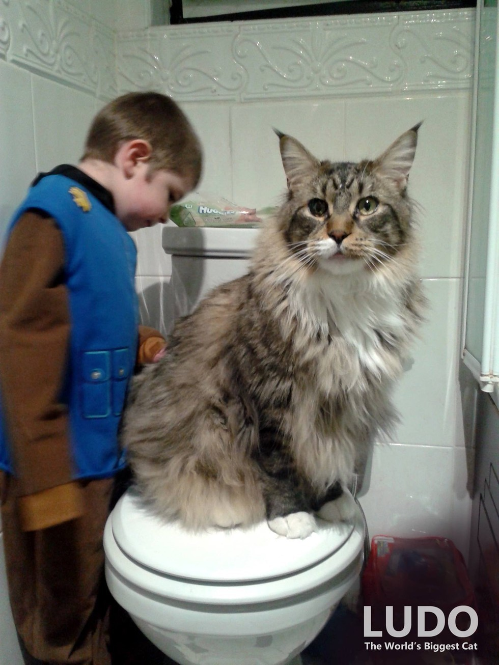 World's Biggest Maine Coon Watches Over His Tiny Brother ...