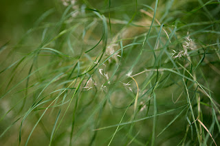 A delicate compositional detail of grass growing with some flora included, from Zilker Park in Austin Texas