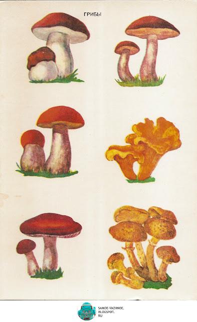 Настольные игры СССР скачать. В лесу игра СССР 1986 год. Игра грибы СССР В лесу. Карточки грибы.