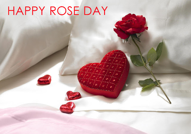 rose day images for wife