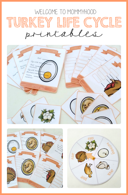 Thanksgiving activities: Turkey Life Cycle Printables and Activities by Welcome to Mommyhood #montessori, #thanksgivingactivities, #thanksgivingprintables, #homeschool, #totlabs