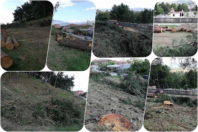 Γιάννενα: Κοπή επικίνδυνων δέντρων στο δασάκι της Περιβλέπτου