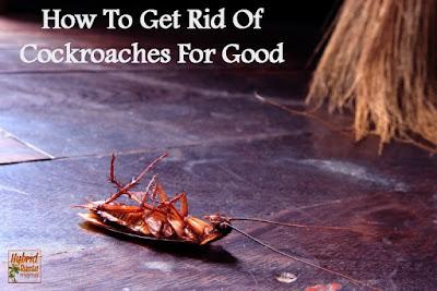 شركة مكافحة الحشرات بالطائف والقضاء على البق والنمل الابيض