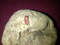 Kegunaan Batu Kinyang