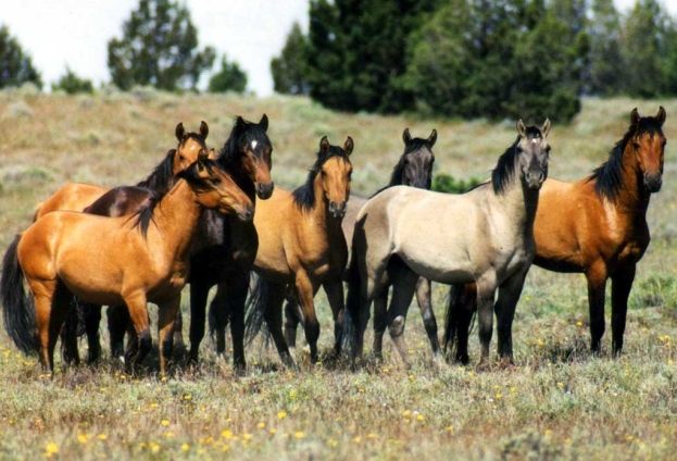 Beloved Wild Horses in Arizona Are Officially Protected