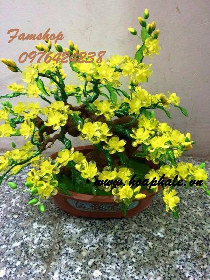 Goc bonsai cay hoa mai o Le Quy Don