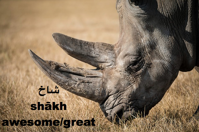 Shakh is slang for awesome or great in Persian Farsi language