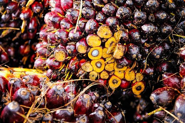 Fakta Indonesia produsen sawit terbesar