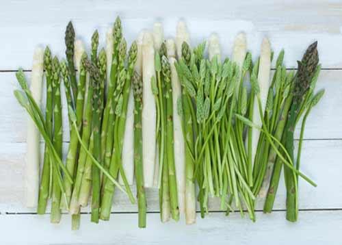 فوائد نبات الهليون العلاجية في الطب البديل