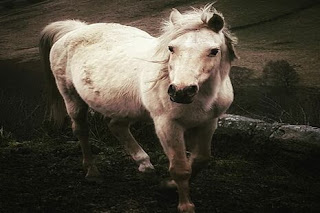 dreams about white horse meaning