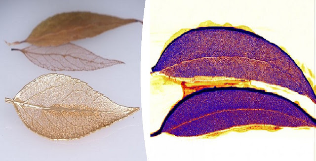 Scientists Discover Gold Literally Growing on Trees in the Outback