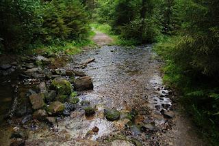 Der Silberbach fließt über einen Weg umgeben von grüner Natur.
