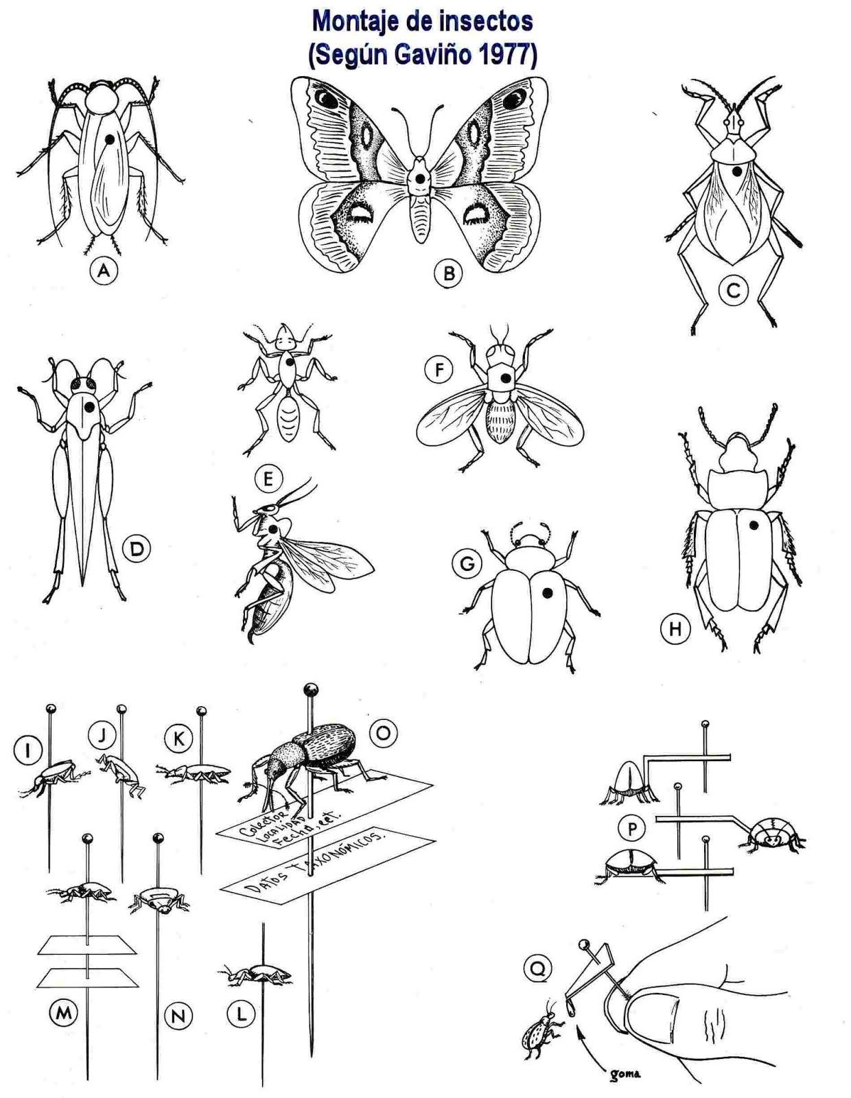 Manual para colectar y montar insectos