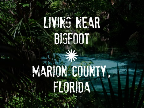 You adult education in marion county florida