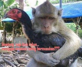 Kumpulan Gambar dan Koleksi Foto lucu Keren Ayam Terbaru
