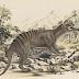 Animales misteriosos de Australia