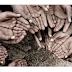 Pengertian Kemiskinan dan Macam-macam Kemiskinan