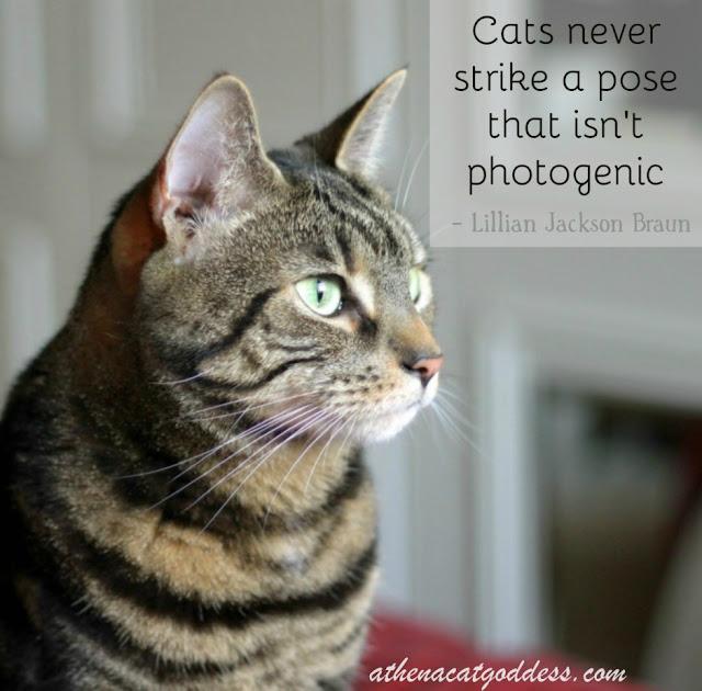 photogenic cats