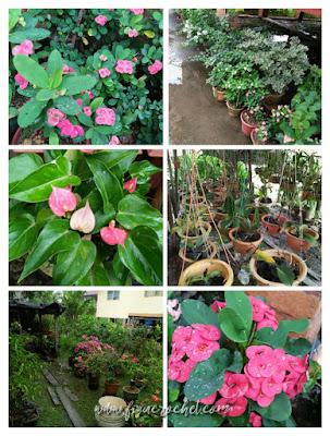 Orkid di rumah
