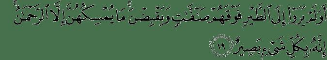 Surat Al-Mulk Ayat 19