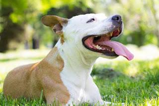 La importancia de la contención de perros para tu perro
