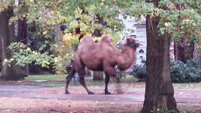 http://www.khq.com/story/27155342/odd-creature-captured-on-camera-in-spokane-park