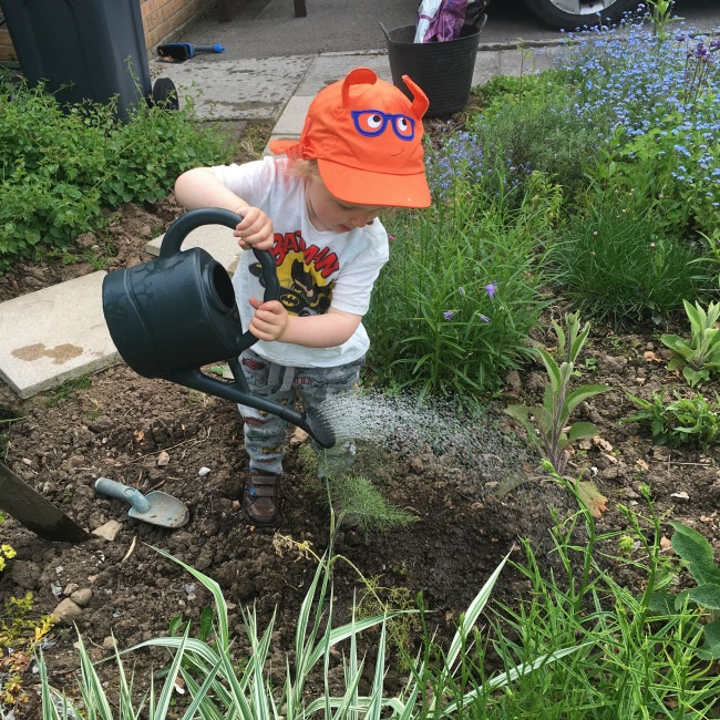 toddler watering the garden