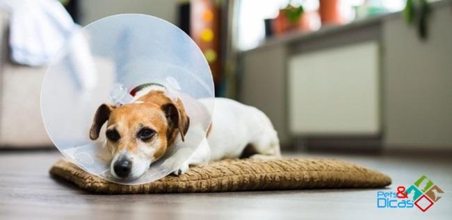 Pontos abertos cirurgia cão