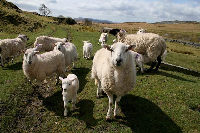Μειώθηκαν οι κτηνοτρόφοι στην Αργολίδα - Πολύ υψηλά τα ενοίκια στα χωράφια για να καλλιεργηθούν κτηνοτροφικά φυτά