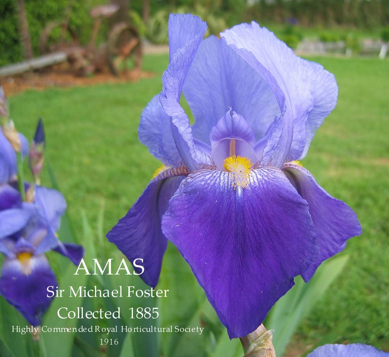 iris prosper laugier