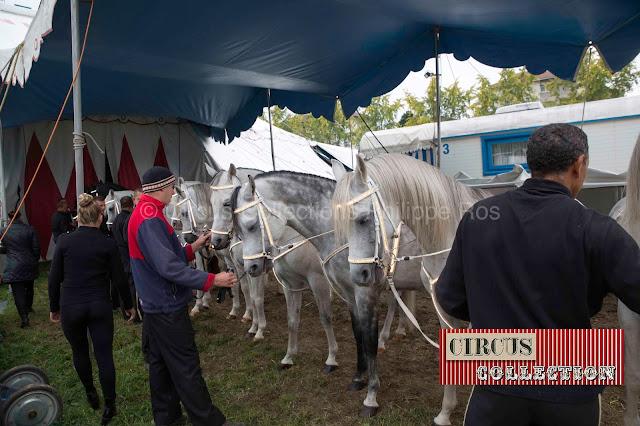 les chevaux aligné à l'antre des artistes