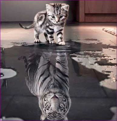 Your perceptive A picture of kitten seeing his Tiger reflection in a puddle of water