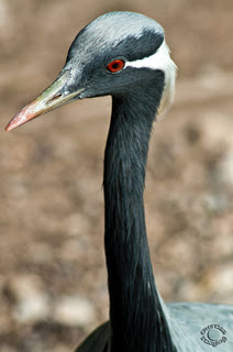 Headshot portrait of a crane in a natural setting professionally photographed by Cramer Imaging at Tautphaus Park Zoo, Idaho Falls, Bonneville, Idaho