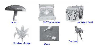 objek kajian atau ruang lingkup ilmu biologi