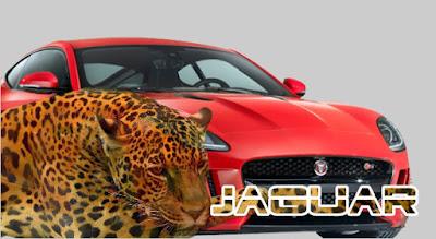 mobil dengan nama hewan
