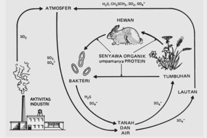 Daur fosfor, pengertian ekosistem, contoh ekosistem, rantai makanan ekosistem.