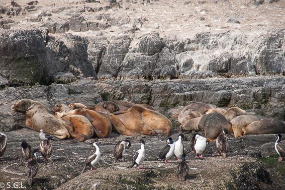 Isla de los lobos en Ushuaia. Argentina