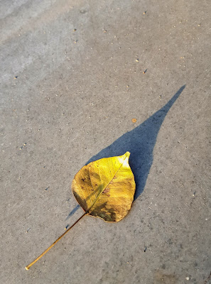 A Minimalist Photo of a yellow leaf and its long shadow shot by Samsung Galaxy S6 Smart Phone