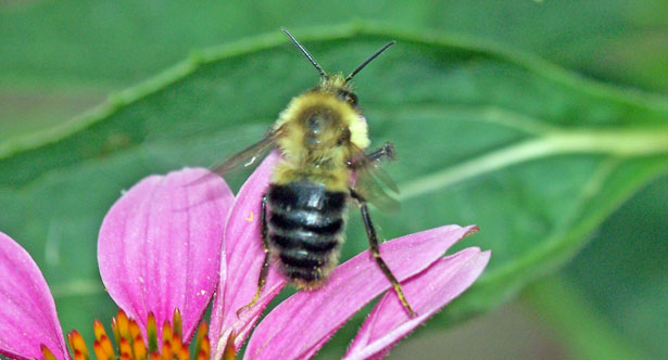Angels for You: Bumble Bee: An Angel Message
