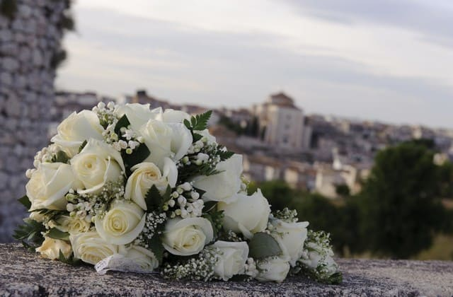 Fakta-Fakta Menarik dan Unik Seputar Bunga Mawar Putih, Pelambang Kesucian hingga Simpati