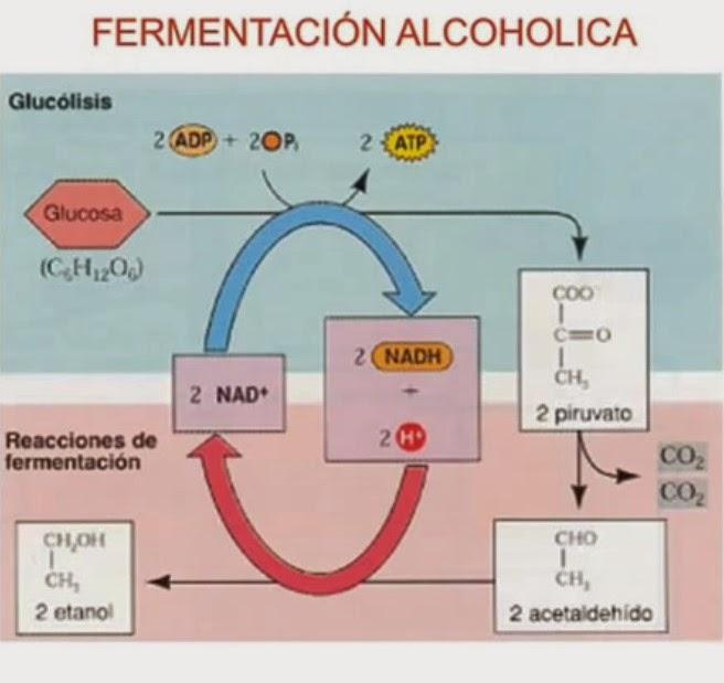 Los plazos del desarrollo del alcoholismo