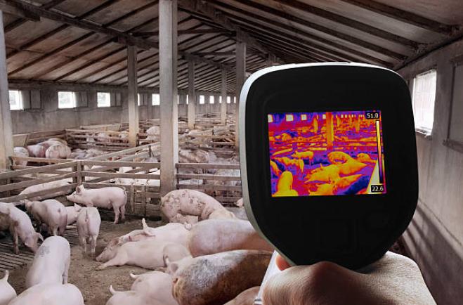 temperature-temperatura-suinos-granja-porcos-calor-suinocultura-bem-estar-climatologia-termometro-mensuracao-quente-frio-hot-cold-swine-piglets-farm