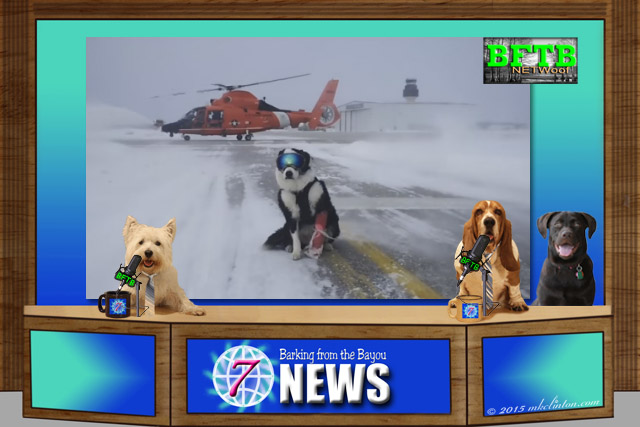 BFTB NETWoof News desk with dog and helicopter on screen