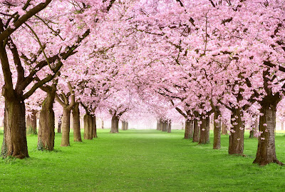 yard of spring trees with pink flowers