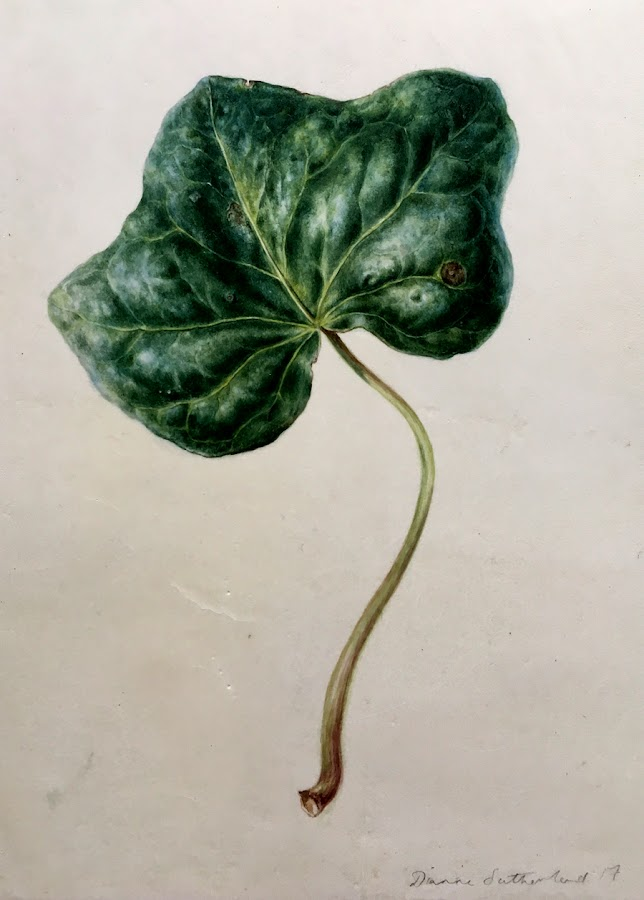 Finished painting of an ivy leaf on vellum