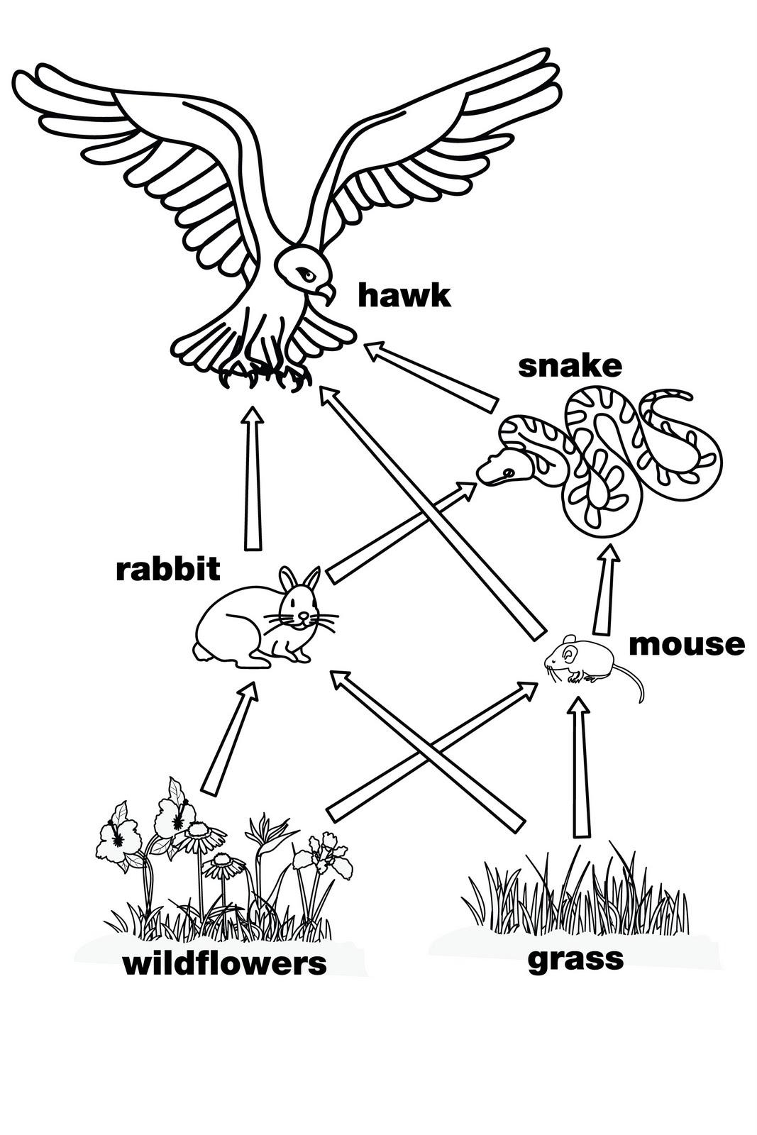 Octopus Food Chain Diagram Nordyne Condenser Unit Wiring Aquarium Animal Habitat Webquest