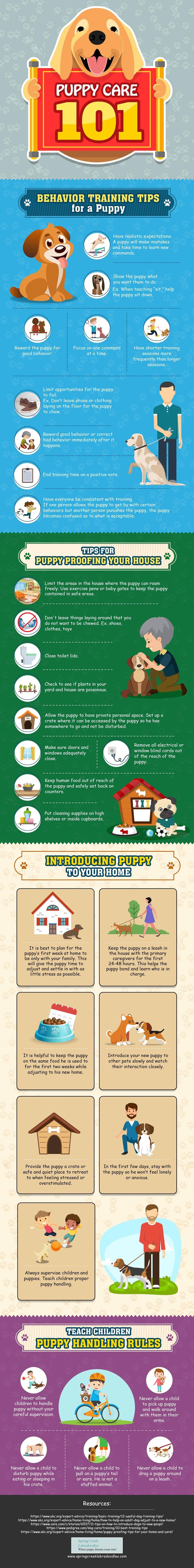 Puppy Care 101 #Infographic