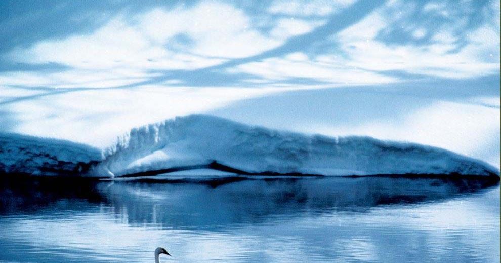 Gambar Wallpaper Burung Hantu Keren