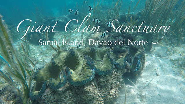 samal: snorkeling at the giant clam sanctuary