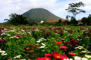 kebun-bunga-tomohon-sulawesi
